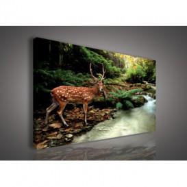 Obraz na plátne obdĺžnik - OB0101 - Jeleň v lese