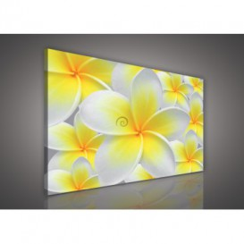 Obraz na plátne obdĺžnik - OB0102 - Žltobiely kvet