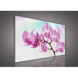 Obraz na plátne obdĺžnik - OB0103 - Ružový kvet