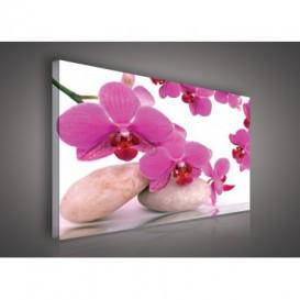Obraz na plátne obdĺžnik - OB0110 - Ružový kvet