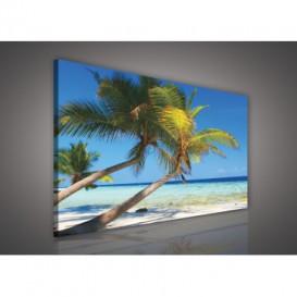 Obraz na plátne obdĺžnik - OB0215 - Palmy