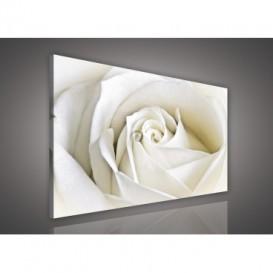 Obraz na plátne obdĺžnik - OB0114 - Biela ruža