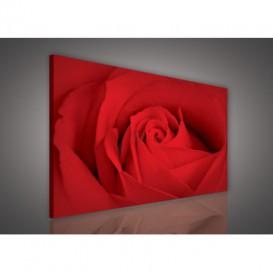 Obraz na plátne obdĺžnik - OB0115 - Červená ruža