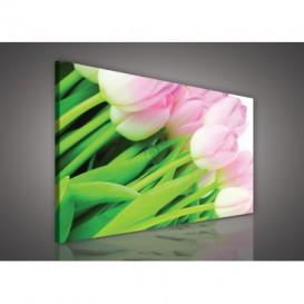 Obraz na plátne obdĺžnik - OB0116 - Tulipány