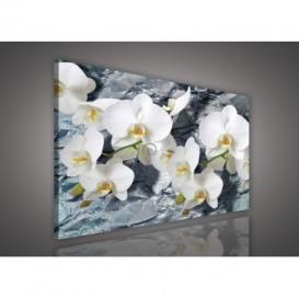 Obraz na plátne obdĺžnik - OB0515 - Orchidea