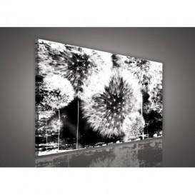 Obraz na plátne obdĺžnik - OB0552 - Púpavy