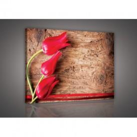 Obraz na plátne obdĺžnik - OB0118 - Tulipány