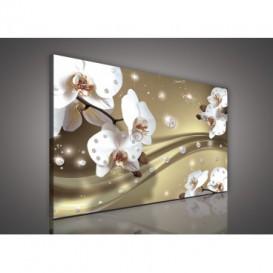 Obraz na plátne obdĺžnik - OB0601 - Orchidea