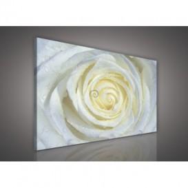 Obraz na plátne obdĺžnik - OB0130 - Biela ruža