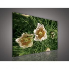Obraz na plátne obdĺžnik - OB0671 - Biele kvety