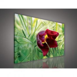 Obraz na plátne obdĺžnik - OB0672 - Červený kvet