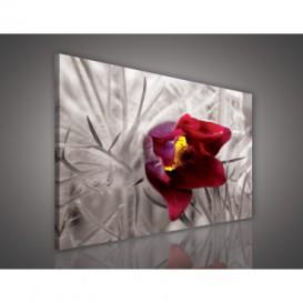 Obraz na plátne obdĺžnik - OB0673 - Červený kvet