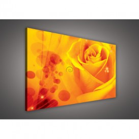 Obraz na plátne obdĺžnik - OB0133 - Oranžová ruža