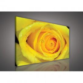 Obraz na plátne obdĺžnik - OB0137 - Žltá ruža