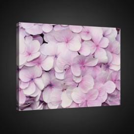 Obraz na plátne obdĺžnik - OB0708 - Ružové kvety