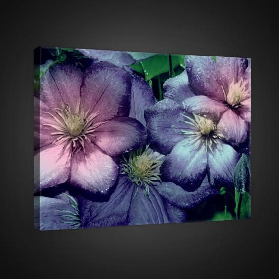 Obraz na plátne obdĺžnik - OB0710 - Fialové kvety