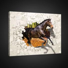 Obraz na plátne obdĺžnik - OB0720 - Kôň
