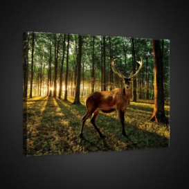 Obraz na plátne obdĺžnik - OB0734 - Jeleň v lese