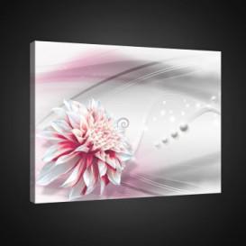 Obraz na plátne obdĺžnik - OB0762 - Bielo ružový kvet