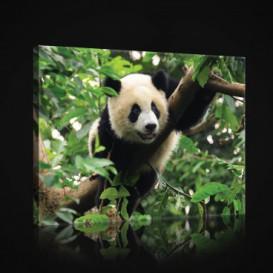 Obraz na plátne obdĺžnik - OB0862 - Panda