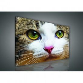 Obraz na plátne obdĺžnik - OB0884 - Mačka
