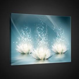 Obraz na plátne obdĺžnik - OB0941 - Biele kvety