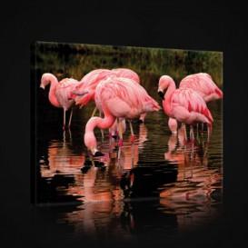 Obraz na plátne obdĺžnik - OB0954 - Plameniaky