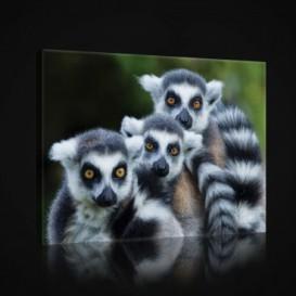 Obraz na plátne obdĺžnik - OB0960 - Lemury