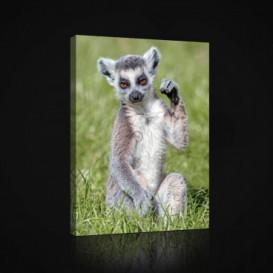 Obraz na plátne obdĺžnik - OB0961 - Lemur