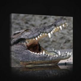 Obraz na plátne obdĺžnik - OB0962 - Krokodíl