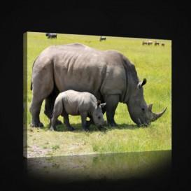 Obraz na plátne obdĺžnik - OB0964 - Nosorožce