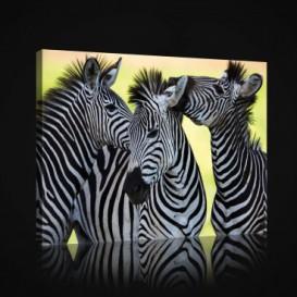 Obraz na plátne obdĺžnik - OB0969 - Zebry