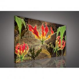 Obraz na plátne obdĺžnik - OB1116 - Červené kvety