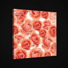 Obraz na plátne štvorec - OB1895 - Ruže