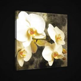 Obraz na plátne štvorec - OB1914 - Žlté kvety