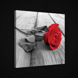 Obraz na plátne štvorec - OB1949 - Ruža
