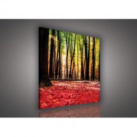Obraz na plátne štvorec - OB2034 - Ružový les