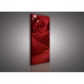 Obraz na plátne panoráma - OB2184 - Červená ruža