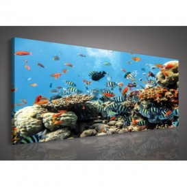 Obraz na plátne panoráma - OB2191 - Podmorský svet