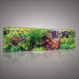 Obraz na plátne panoráma - OB2220 - Akvárium