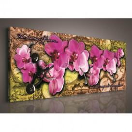 Obraz na plátne panoráma - OB2235 - Ružové orchidey