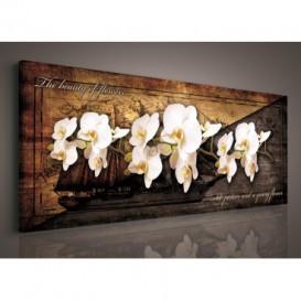 Obraz na plátne panoráma - OB2236 - Biele orchidey