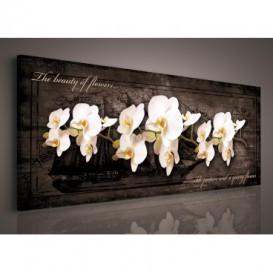 Obraz na plátne panoráma - OB2238 - Biele orchidey
