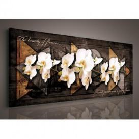 Obraz na plátne panoráma - OB2239 - Biele orchidey