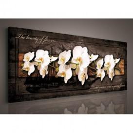 Obraz na plátne panoráma - OB2240 - Biele orchidey