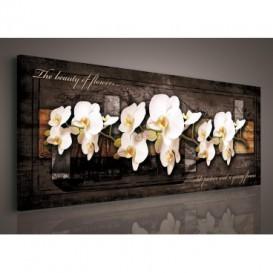 Obraz na plátne panoráma - OB2241 - Biele orchidey