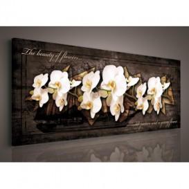 Obraz na plátne panoráma - OB2242 - Biele orchidey