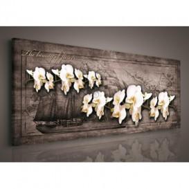 Obraz na plátne panoráma - OB2244 - Biele orchidey
