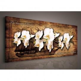 Obraz na plátne panoráma - OB2245 - Biele orchidey