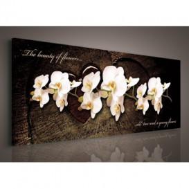 Obraz na plátne panoráma - OB2246 - Biele orchidey